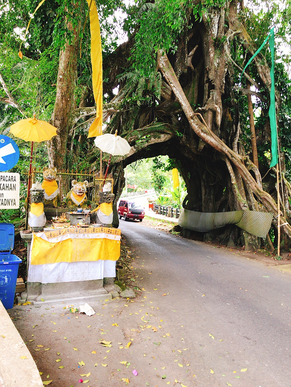 Bunut Bolong【木のトンネル】